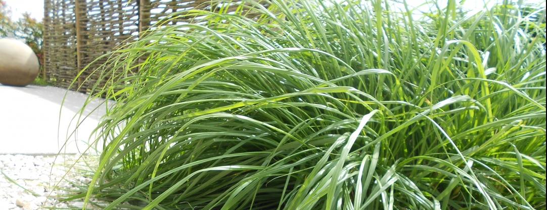 Onderhoudsvriendelijke tuin tuinen ward lyppens lovendegem for Onderhoudsvriendelijke tuin aanleggen